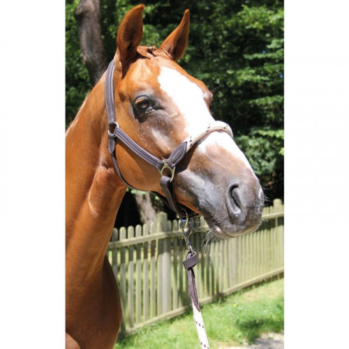 TREADSTONE - Richtan leather halter with rope on the chanfrin